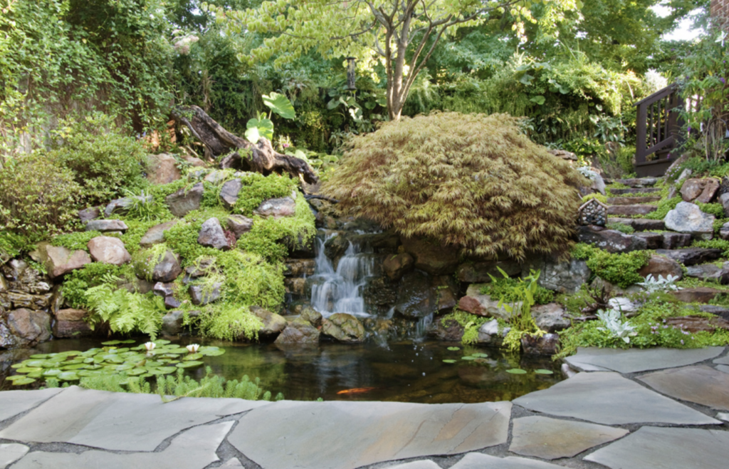 Koi pond by Bauer Falls